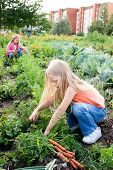 stock photo of pretty girl  - Two young girls working in vegetable garden - JPG