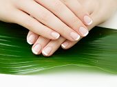 Beautiful Delicate Hands With Manicure And Green Leaves, Closeup Isolated On White. Photo Of A Femal poster
