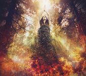 Beauty Photo. Tree Is A Life. Forest Fires Kill Lives. poster