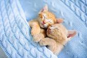 Baby Cat. Ginger Kitten Sleeping Under Blanket poster