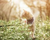 Cute Tabby Cat In Bandana Walking In The Forest Outdoor. poster