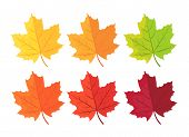 Set Of Autumn Leaves On White. Autumn Background With Leaves. Botanical Forest Plants. Maple Leaf In poster