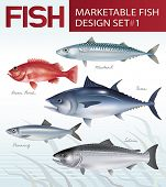 pic of fresh water fish  - Marketable fish image design set 1 - JPG