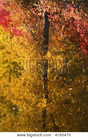 Fall Colors Tree Reflections Wenatchee River Stevens Pass Leaven