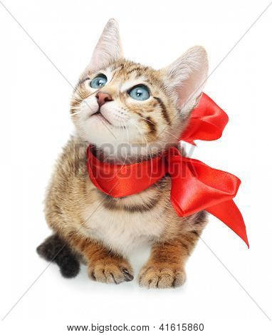 Kitten looking up with red bow on a white background