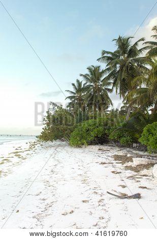 Beach on Praslin Island In Seychelles