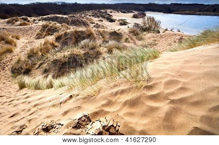 Sandy Dunes In Haarlem, Netherlands