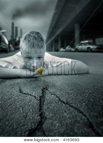 Boy And A Flower