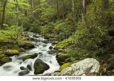 Rushing water in the springtime in the Smoky Mountains