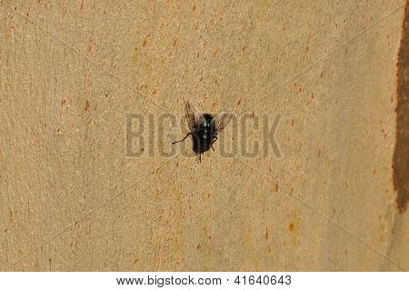 Black Fly On Tree Trunk
