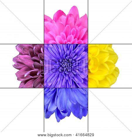 Colorful Chrysanthemum Flower Mosaic Design