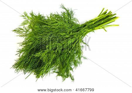 Fresh Branches Of Green Dill Isolated
