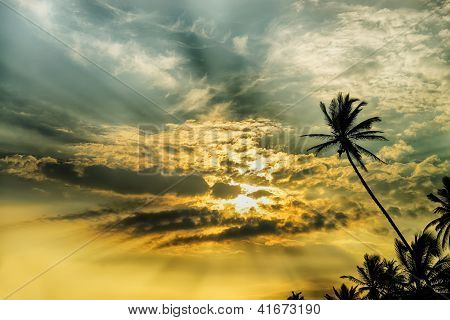 Palm Tree And Fantastic Sunset