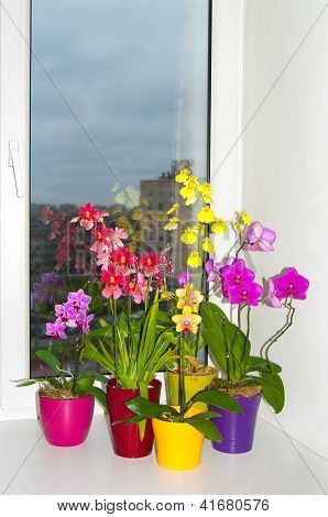 Orchids In The Pots