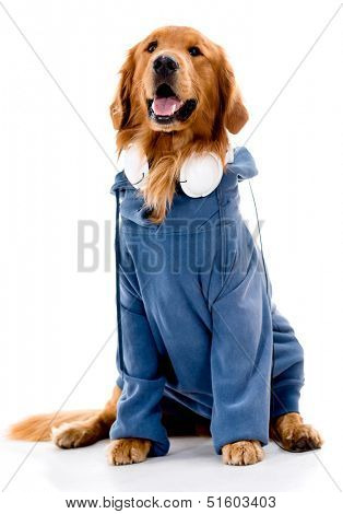 Dog dressed in rappers clothes - isolated over a white background