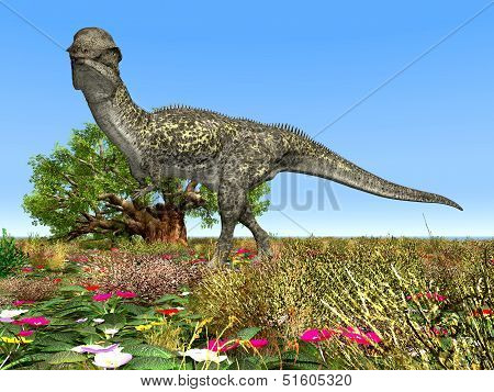 Dinosaur Stegoceras
