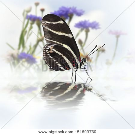 Zebra Longwing (Heliconius Charitonius) Butterfly With Reflection