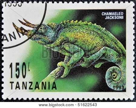 A stamp printed in Tanzania shows chamaeleo jacksonii