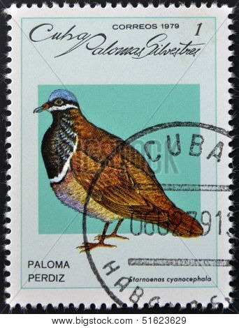 A stamp printed in Cuba dedicated to feral pigeons will shows Quail-dove (Geotrygon caniceps)