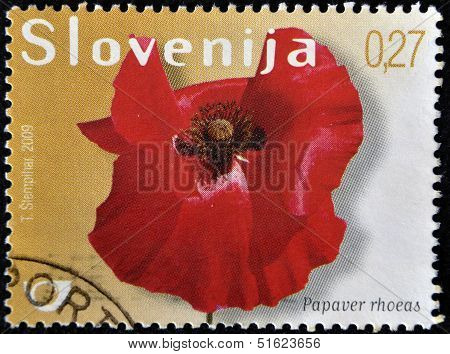 A stamp printed in Slovakia shows papaver rhoeas