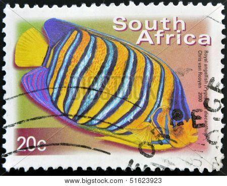 A stamp printed in RSA shows royal angelfish Pygoplites Diacanthus