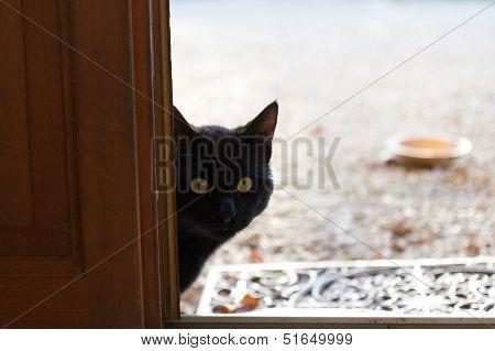 Stray Cat Peering Through The Door