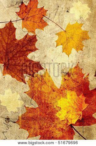 Grunge background with autumn maple leaves