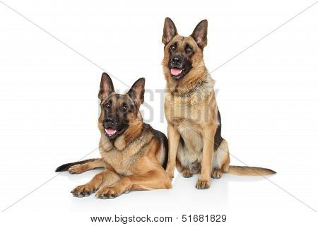 German Shepherd Dogs On White Background