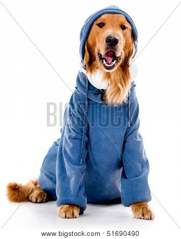 Hip dog in a hoodie - isolated over a white background