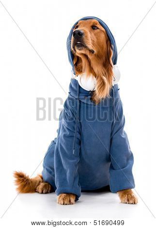 Beautiful dog dressed in hip-hop clothes - isolated over white