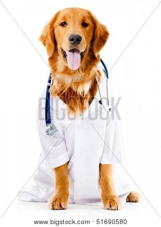 Dog dressed as a Doctor or vet - isolated over white background