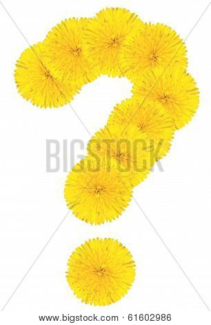 Question Sing Made From Dandelion Flower