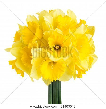 Bouquet Of Spring Narcissus