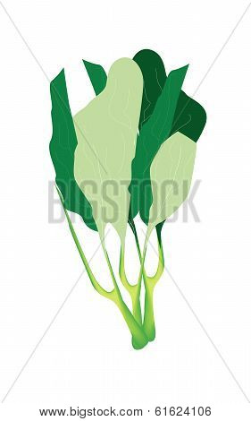Fresh Green Chinese Kales On White Background