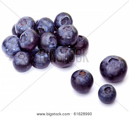 Berries of a bilberry  ,Still-life on a white background