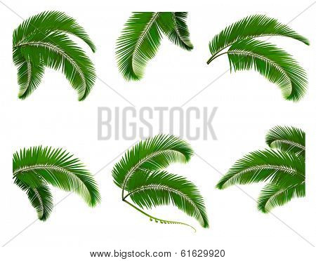 Set green branches with leaves of palm trees. Raster version.