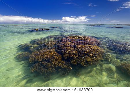 Coral reef in shallow tropical water lagoon.