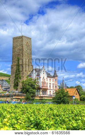 Vineyard Near Fortress Boosenburg, Ruedelsheim, Hessen, Germany