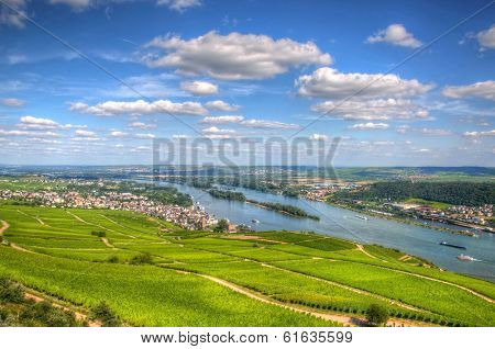 Vineyard, Ruedelsheim, Hessen, Germany