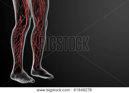 3d render lymphatic system