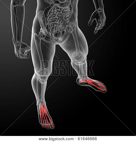 3d render illustration of the male x-ray of foot