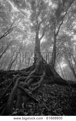 Vertical photo of a dark tree with big twisted roots in a forest with fog on halloween