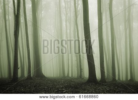 Dark elegant forest with fog trough trees