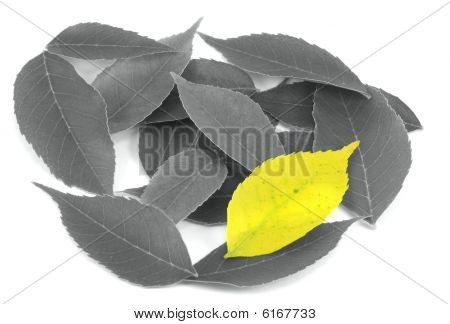 Uniqueness - Yellow Leaf Among Black And Whites