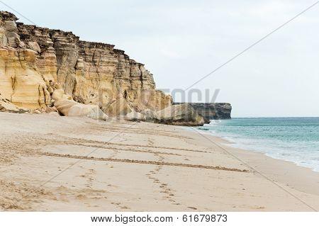 Turtle tracks on a beach