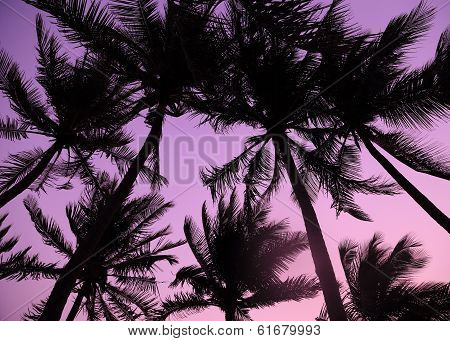 Palm Trees Silhouette At The Sunset