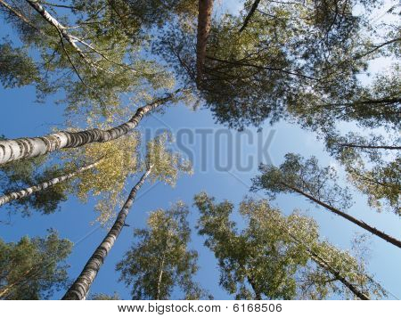 treetop on background sky