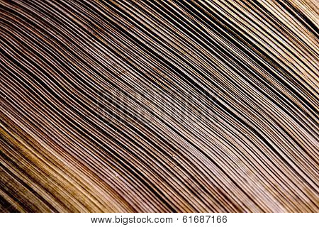 Close Up Of Patterns And Textures On Palm Frond
