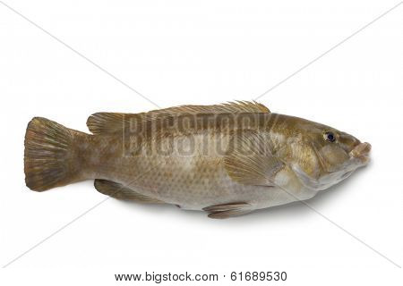 Fresh brown wrasse fish on white background