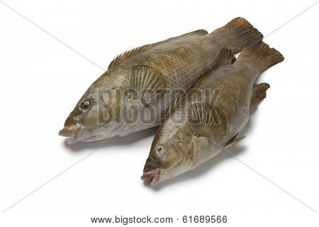 Two fresh brown wrasse fishes on white background